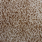 Haute House Fabric - Alkali Camel - Contemporary Velvet #3932
